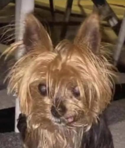 Lost Female Dog last seen Regina way , Chesapeake, VA 23321