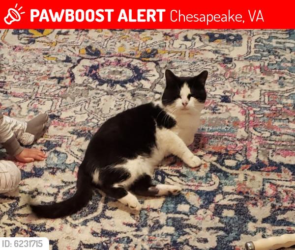 Lost Male Cat last seen Near Avonlea Pointe , Chesapeake, VA 23322