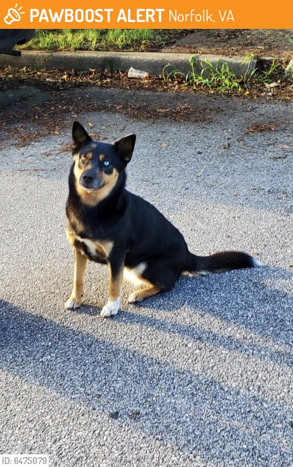 Found/Stray Female Dog last seen Virginia Beach Blvd and Newtown Rd , Norfolk, VA 23502