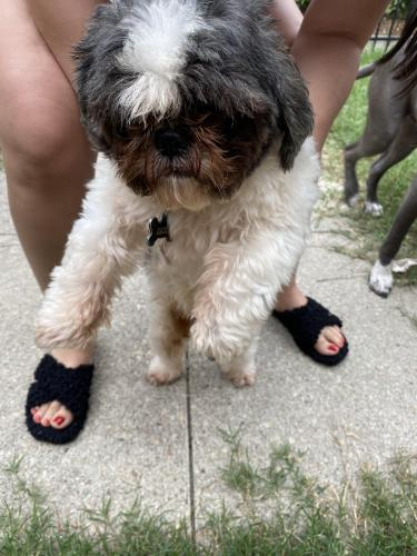 Found/Stray Male Dog last seen Military housing Queens Way, Norfolk, VA 23551