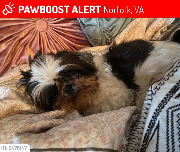Lost Female Dog last seen Near johnstons rd, Norfolk, VA 23513