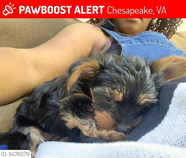 Lost Female Dog last seen Cherry Tree, Chesapeake, VA 23320