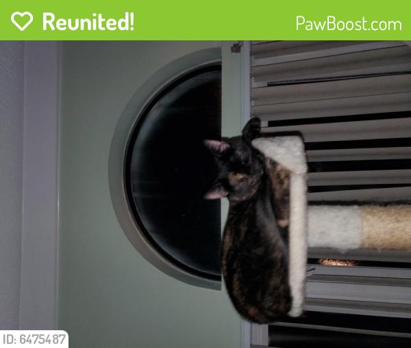 Reunited Female Cat last seen east lake condos, Chesapeake, VA 23322