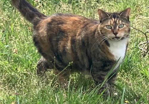 Lost Female Cat last seen Buckner dr , Virginia Beach, VA 23453