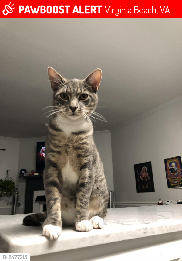 Lost Male Cat last seen Mikie ct and Canadian arch, Virginia Beach, VA 23453
