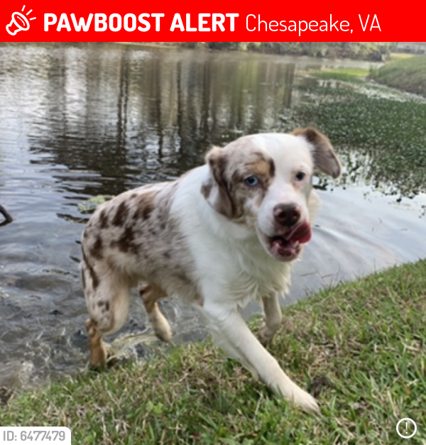 Lost Male Dog last seen park, Chesapeake, VA 23321
