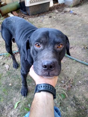 Found/Stray Male Dog last seen Near S E 4th St Grand Prairie Texas, Grand Prairie, TX 75051