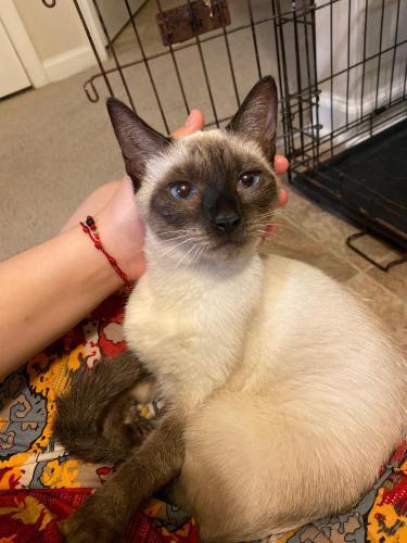 Found/Stray Unknown Cat last seen Deloice Crescent, Newport News, VA 23608