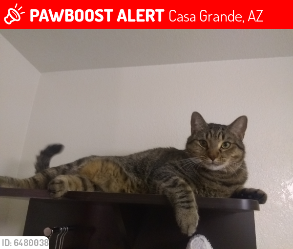 Lost Male Cat last seen Rest area westbound, Casa Grande, AZ 85122