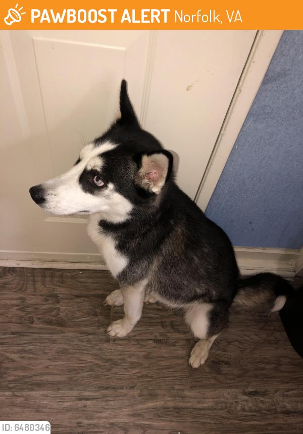 Found/Stray Female Dog last seen O'Connor crescent car parking lot , Norfolk, VA 23503