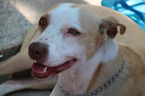 Lost Female Dog last seen Talley wood ct , Chester, VA 23831