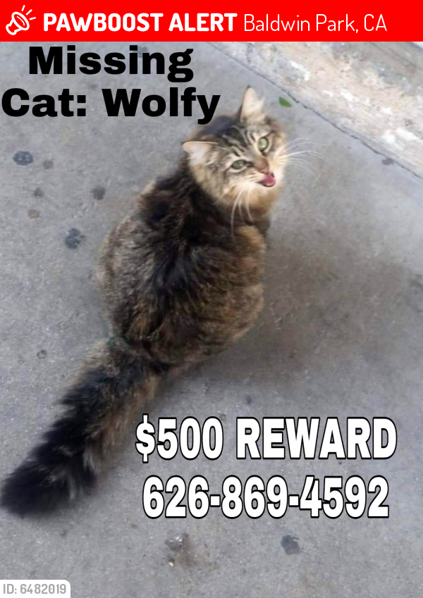 Lost Female Cat last seen Bess and Frazier , Baldwin Park, CA 91706
