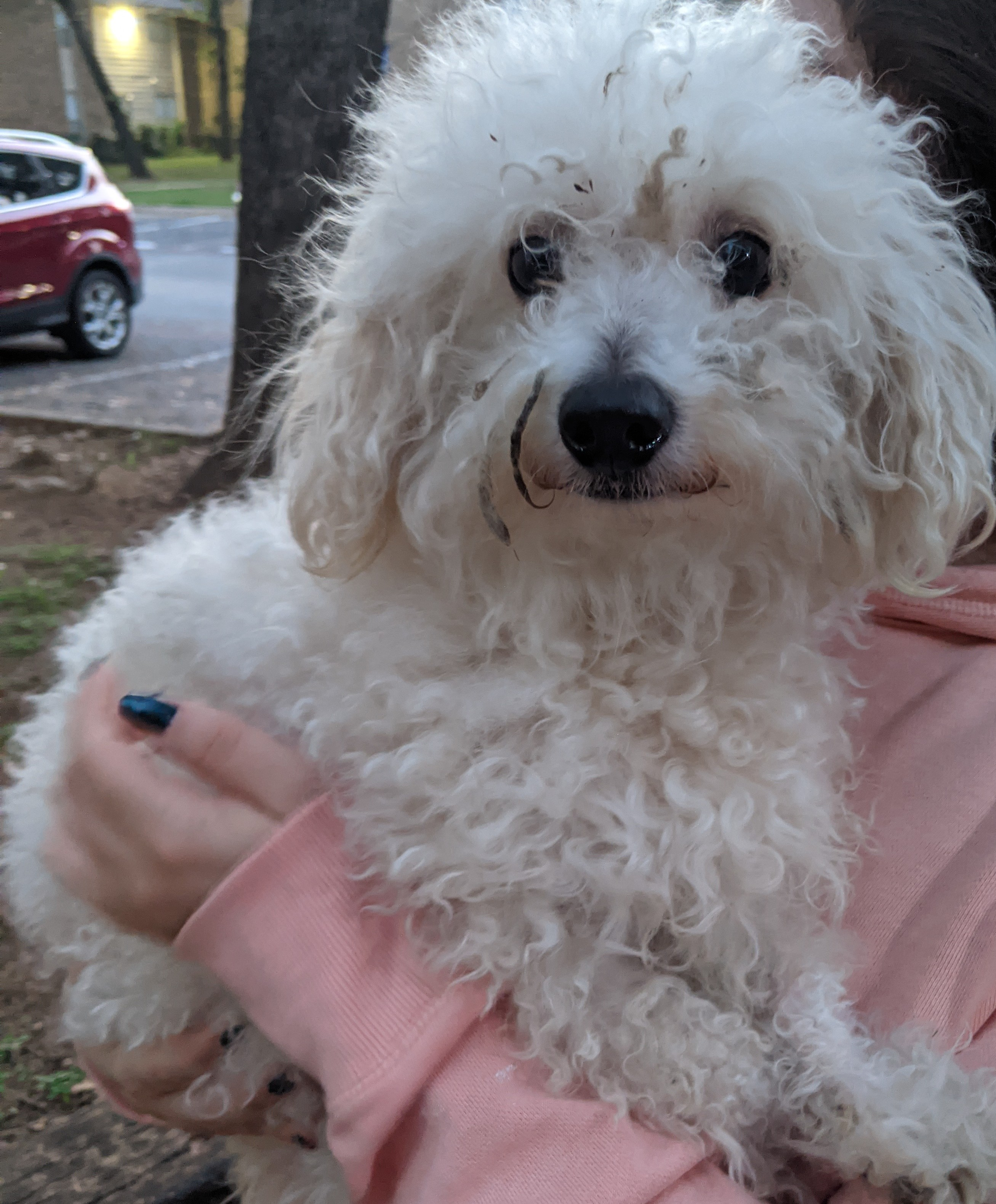 Found/Stray Male Dog last seen Homedale Dr & Brentwood Stair Rd, Fort Worth, TX 76112