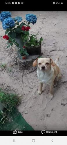 Lost Female Dog last seen Walmart on Keystone ave indianapolis, Indianapolis, IN 46240