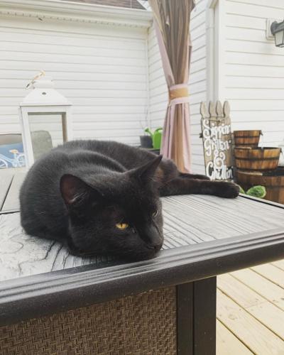 Lost Male Cat last seen Colony manor, Chesapeake, VA 23321