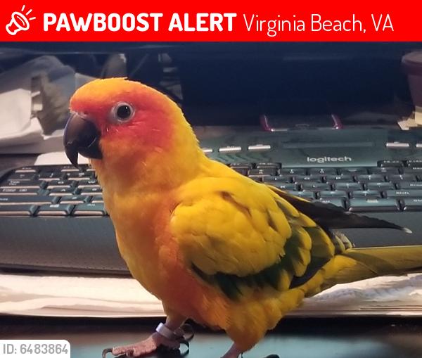 Lost Female Bird last seen Rosemont and Van Buren, Virginia Beach, VA 23452