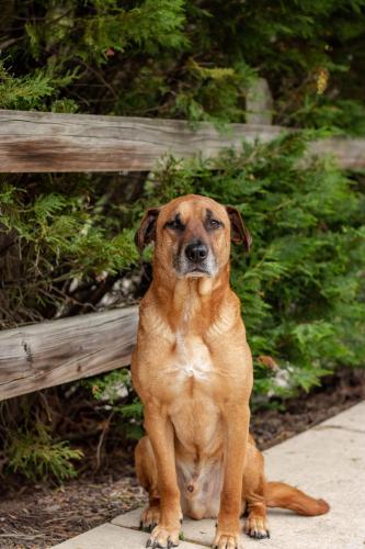 Lost Male Dog last seen Bennett Creek Park, Suffolk, VA 23435