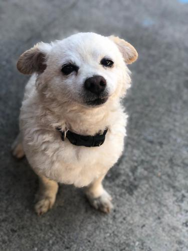 Lost Male Dog last seen Acacia & Poplar, Compton, CA 90220