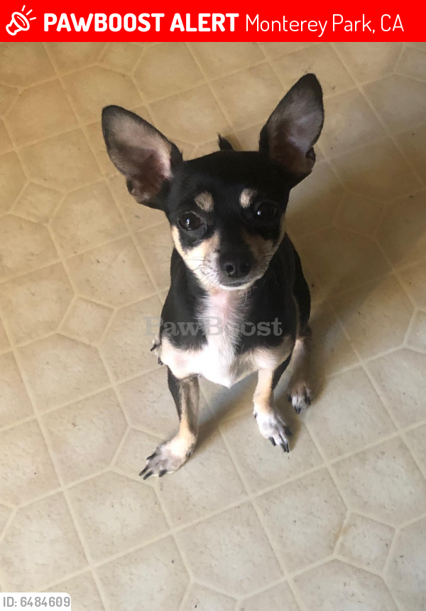 Lost Male Dog last seen Garvey and new ave, Monterey Park, CA 91755