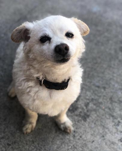 Lost Male Dog last seen Poplar and Acacia, Compton, CA 90220