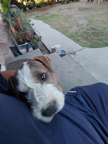 Lost Female Dog last seen Durfee and Parkway , El Monte, CA 91732