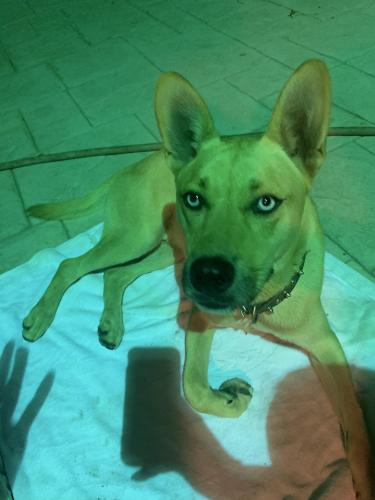 Found/Stray Male Dog last seen Foothill and arroyo st, Los Angeles, CA 91340