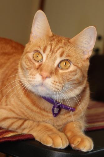 Lost Male Cat last seen Near rd & Park Road , Anderson, IN 46011