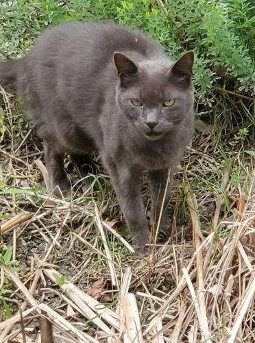 Found/Stray Unknown Cat last seen Moyock , Moyock, NC 27958