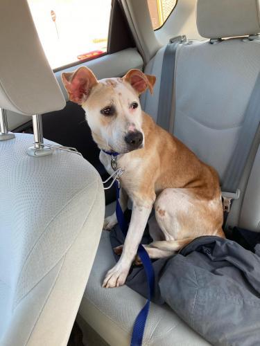 Lost Female Dog last seen catoctin circle se , Leesburg, VA 20175