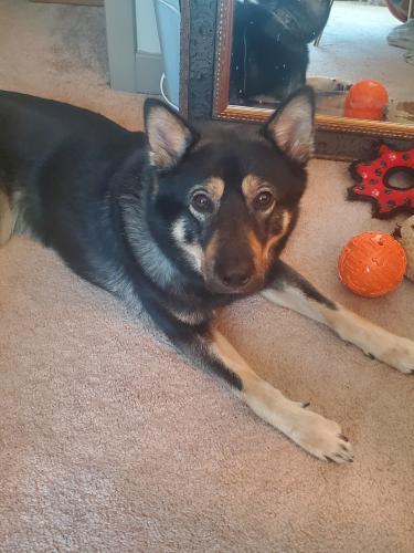 Lost Male Dog last seen Oxon hill, Oxon Hill, MD 20745