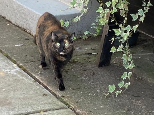 Found/Stray Unknown Cat last seen Near Princess St., Alexandria, VA 22314
