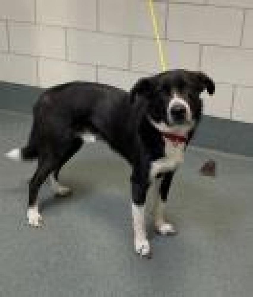 Shelter Stray Male Dog last seen Alexandria - Glendale Ter, Fairfax County, VA, Fairfax, VA 22030