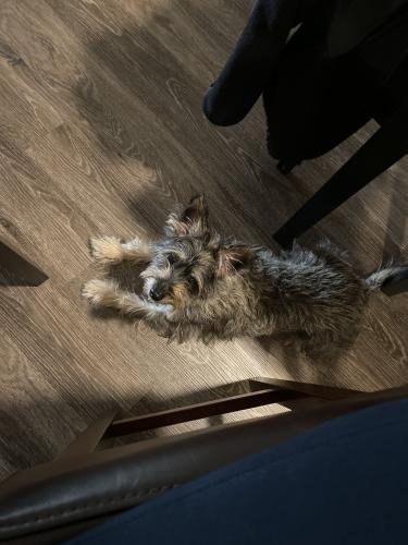 Found/Stray Female Dog last seen Camden Lansdowne Apartments, Lansdowne, VA 20176