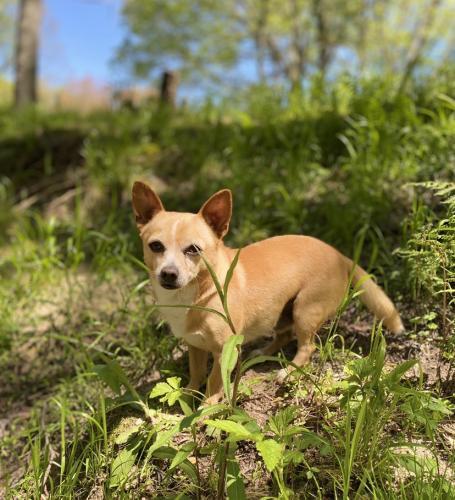 Lost Male Dog last seen Mill Creek Rd , Bethlehem, GA 30620