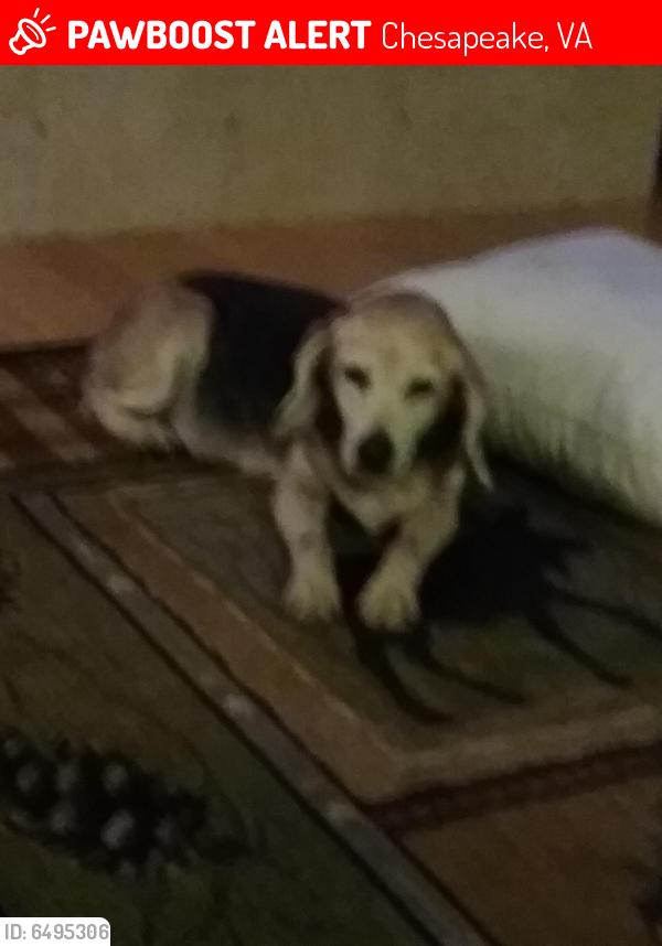 Lost Female Dog last seen West Road, Chesapeake , Chesapeake, VA 23323