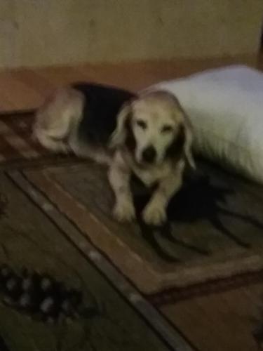 Lost Female Dog last seen West Road, Chesapeake , Chesapeake, VA 23323