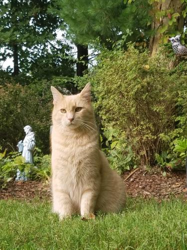 Lost Male Cat last seen Crown Point, Ira and N. Revere Rd, Akron, OH 44333