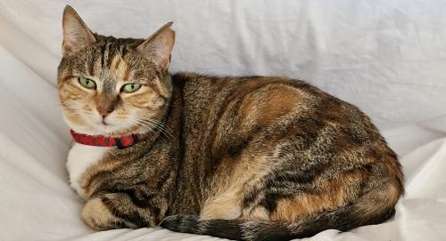 Lost female Cat last seen the Virginia Welcome Center at Chesapeake Bay Bridge Tunnel Toll - center is right across street from toll. , Cape Charles, VA 23310