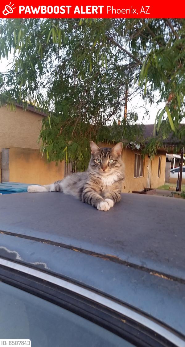 Lost Male Cat last seen 22nd drive and missouri, Phoenix, AZ 85015