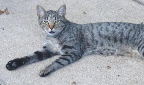 Lost Female Cat last seen Near Byers Ave, Akron, OH 44302