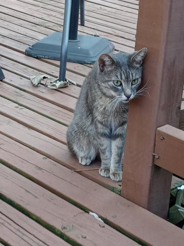 Found/Stray Female Cat last seen Arden and Adams, Newport News, VA 23601
