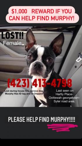 Lost Female Dog last seen Hartly Street and Georgetown skyler rd and , Ooltewah, TN 37363