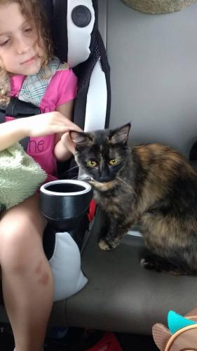 Lost Female Cat last seen South Comanche Cluster, Virginia Beach, VA 23462
