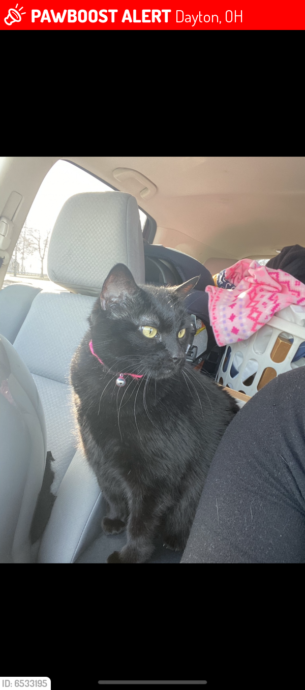 Lost Female Cat last seen Wilmington Pike , Dayton, OH 45440
