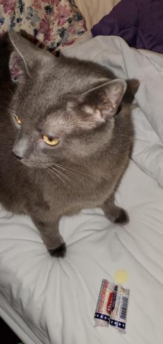 Lost Male Cat last seen Leckie Street & Culpepper, Portsmouth, VA 23704