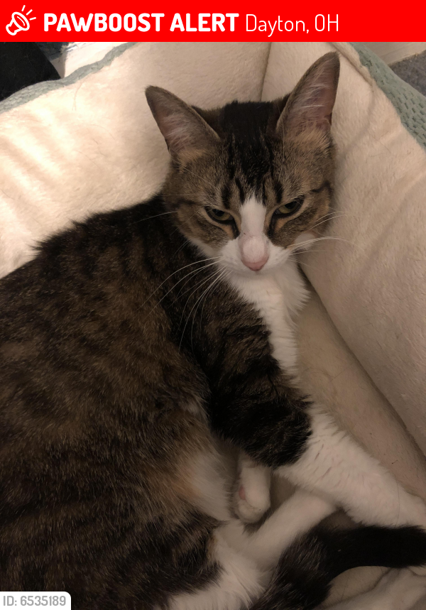Lost Female Cat last seen Livingston Ave , Dayton, OH 45403