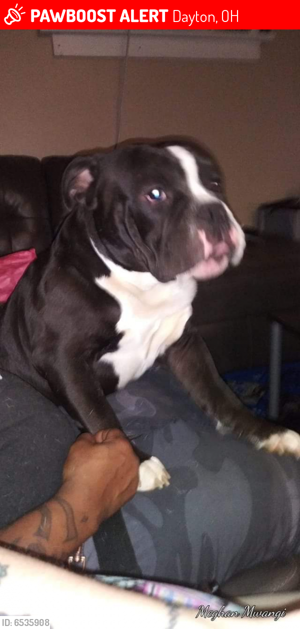 Lost Male Dog last seen Riverview and Broadway, Dayton, OH 45402