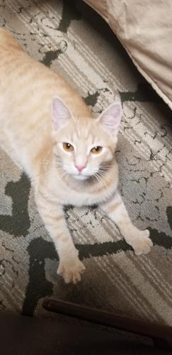 Found/Stray Male Cat last seen Glenwood neighborhood,  Southaven drive , Virginia Beach, VA 23464