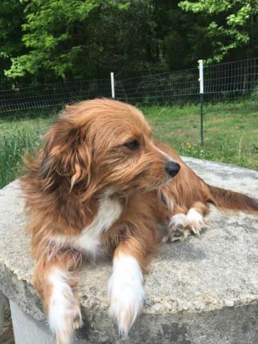 Lost Female Dog last seen Diamond Ln and Hartwood Rd, Fredericksburg, VA 22406