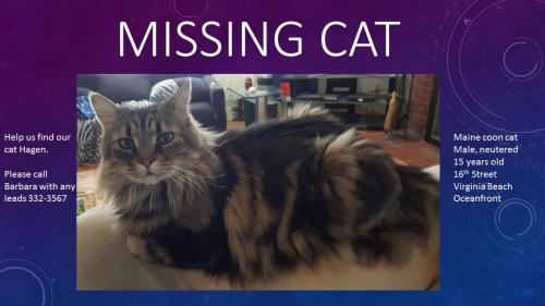 Lost Male Cat last seen Near 16th Street, Virginia Beach, VA 23451
